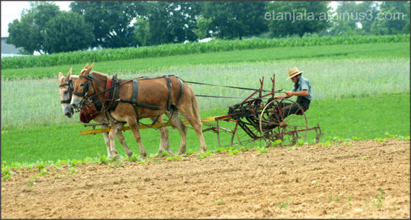 Cross America- Amish community in PA (9)