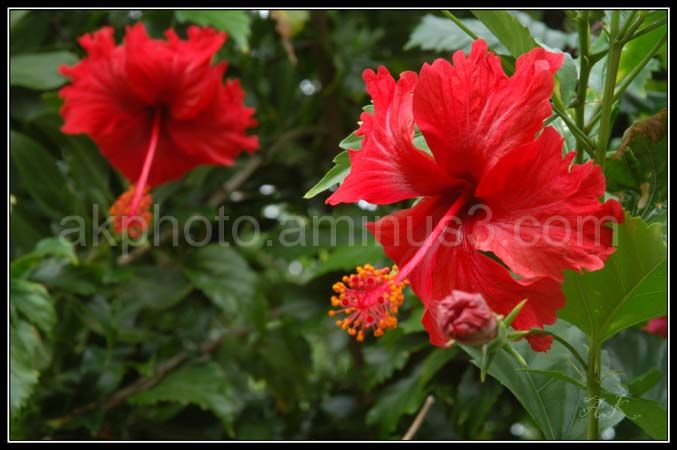 flowers, red, red flowers