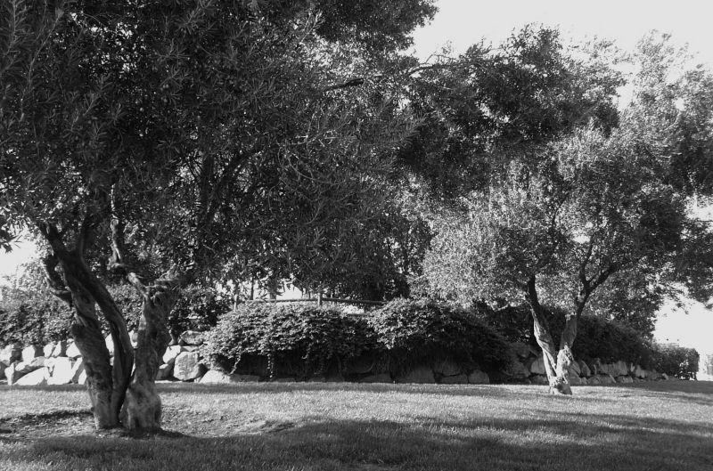 Parella d'oliveres a la gran ciutat