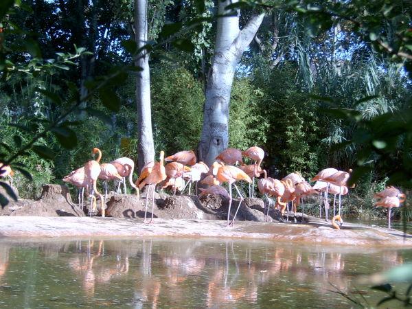 Zoo de Barcelona (II). Flamencs