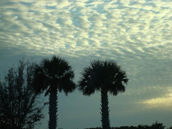 Florida VII