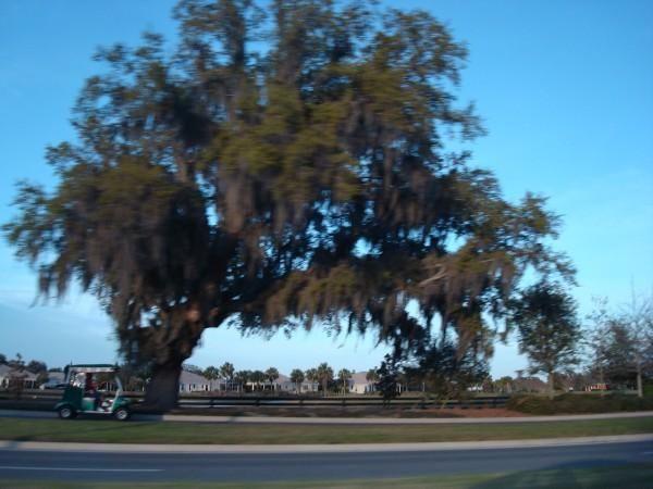 Florida X
