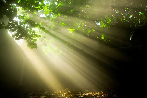 Sun rays on plants