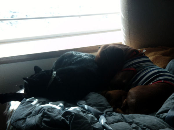 Nap time (the dog and cat)