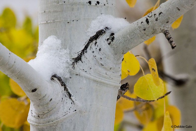 Early Snow with Fall Color