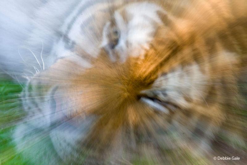 Abstract Tiger