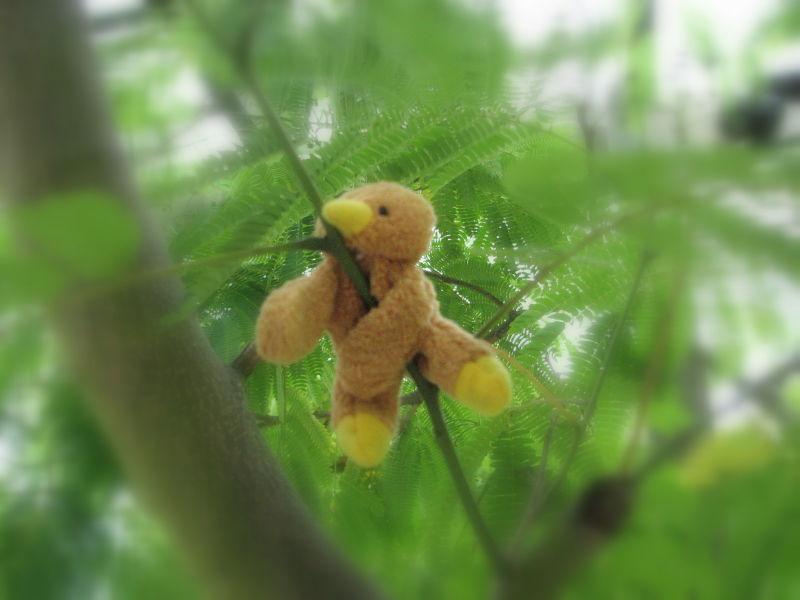 kaha in the tree