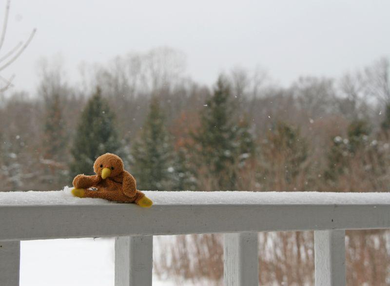Kaha's First Snow