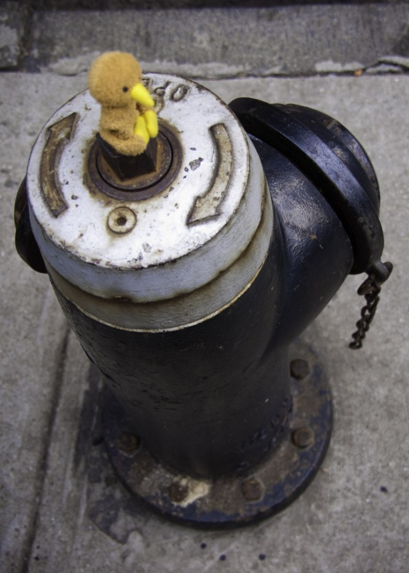 a kiwi and a hydrant
