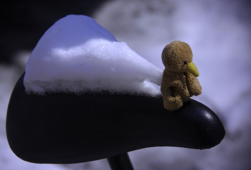 A kiwi on a bicycle seat with snow