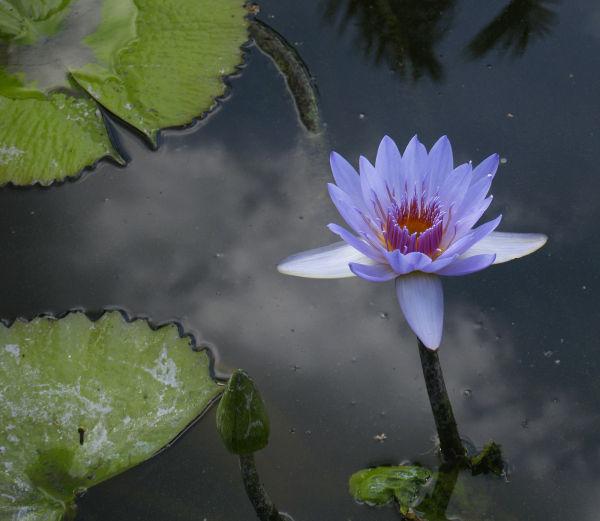 Jesse's Pond