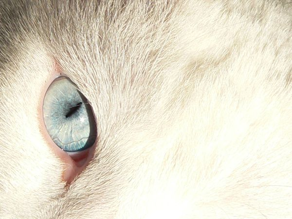 Dixie's eye
