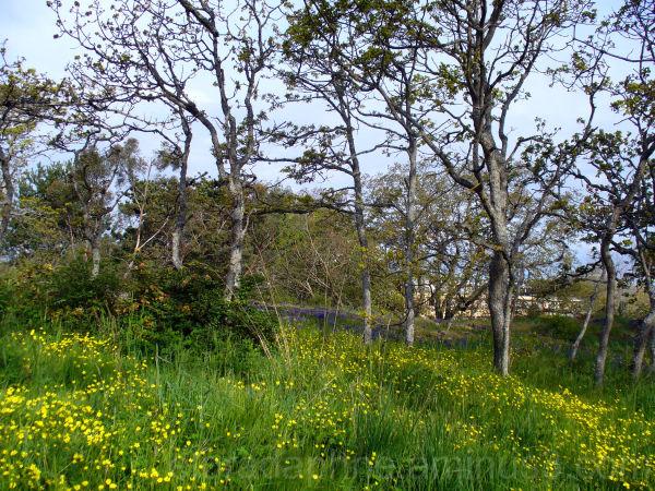 beacon hill park victoria bc Canada
