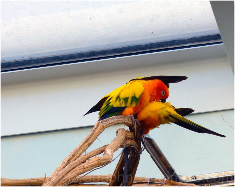 Parrots Aquarium