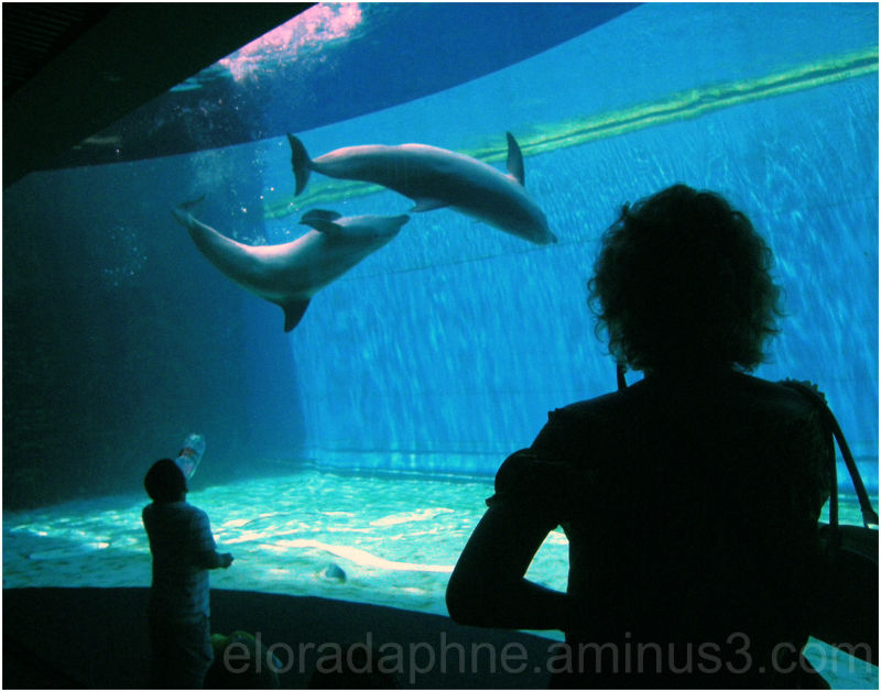 dolphins and people