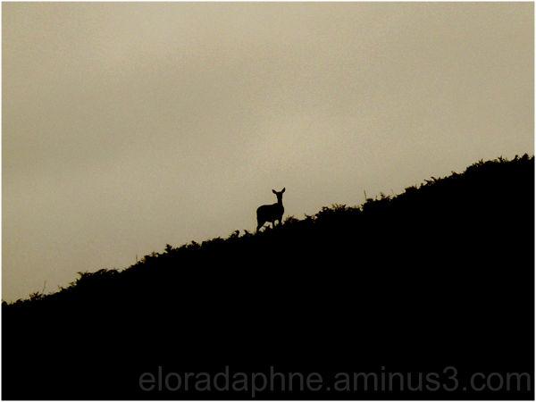 deer ramsey island