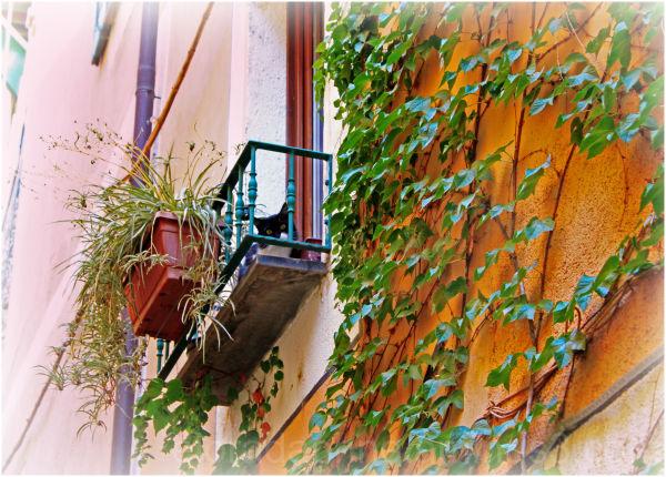 cat balcony