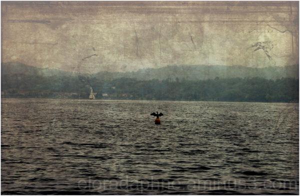 bird lake buoy