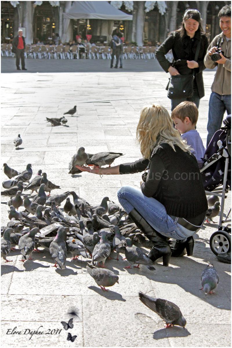 pigeon venice