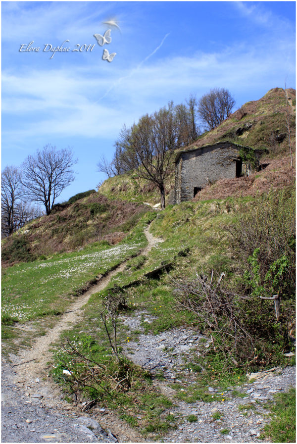 path hillside