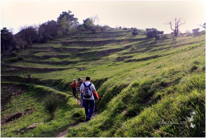 hills fields