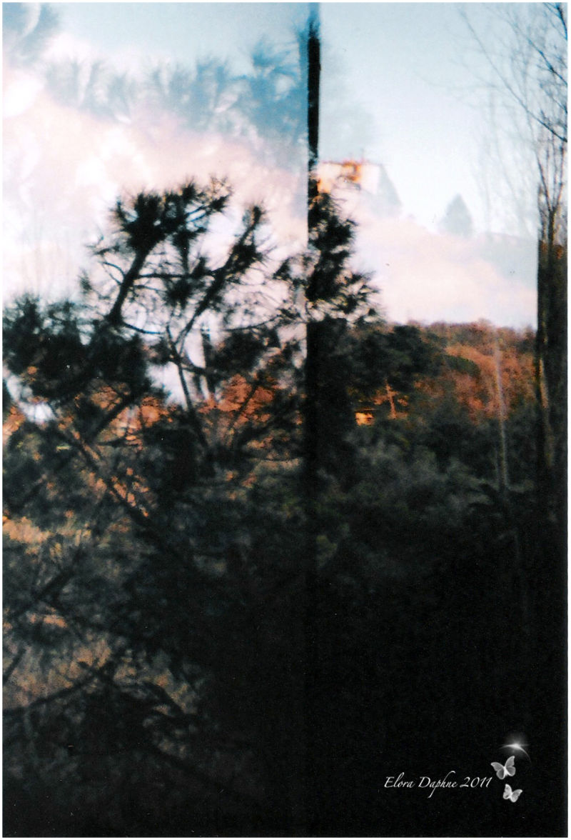 lomo trees