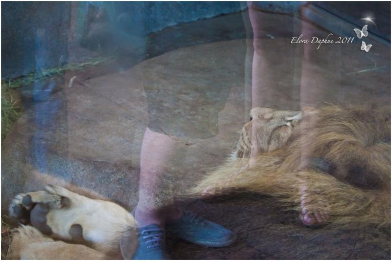 lions zoo