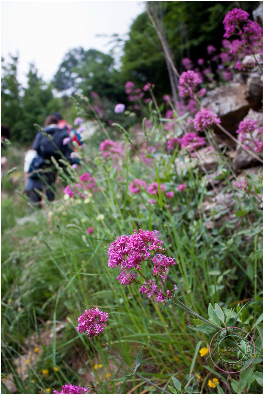 purple flowers field