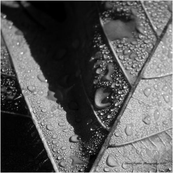 raindrops leaves