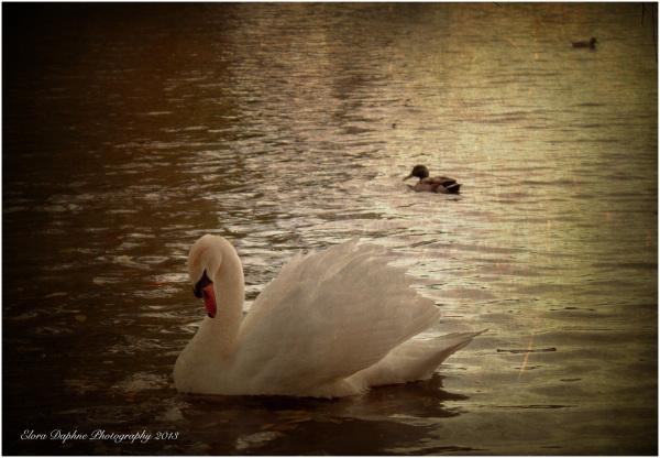 swan wollaton nottingham england