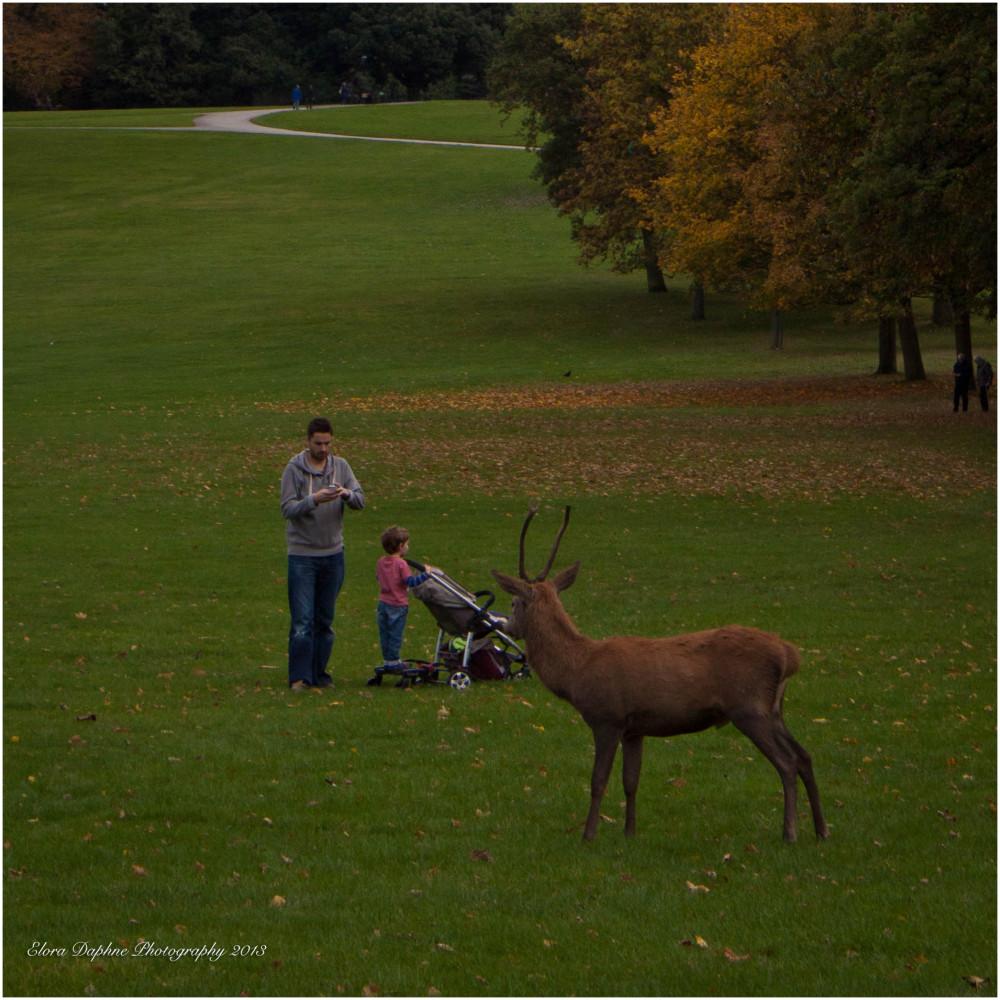 deer wollaton nottingham