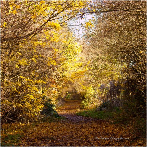 chaddesden woods derby trees landscape