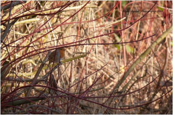 bird hedge