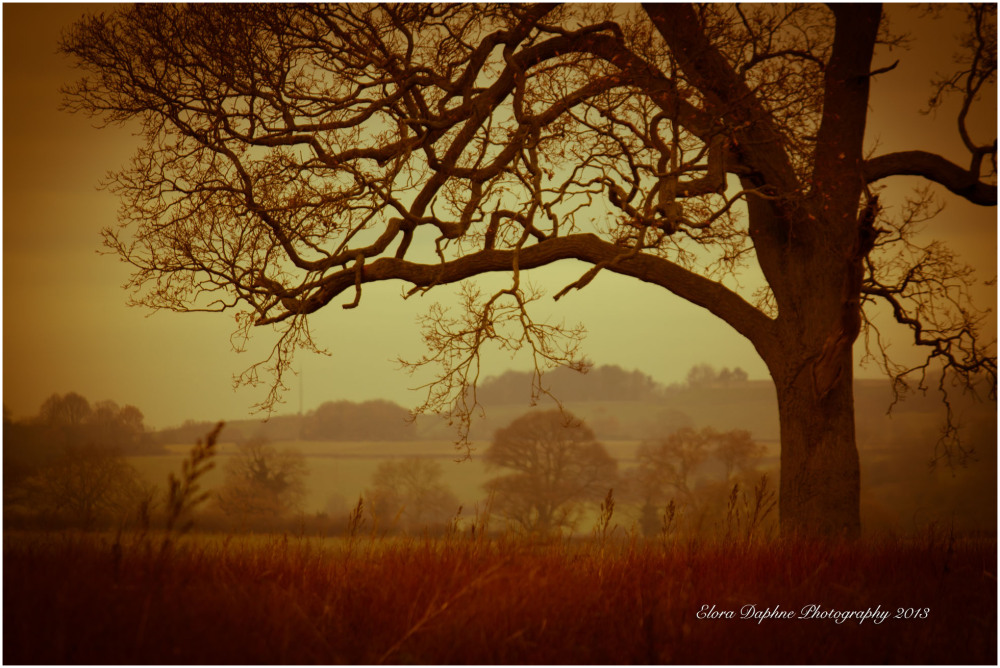 tree field countryside