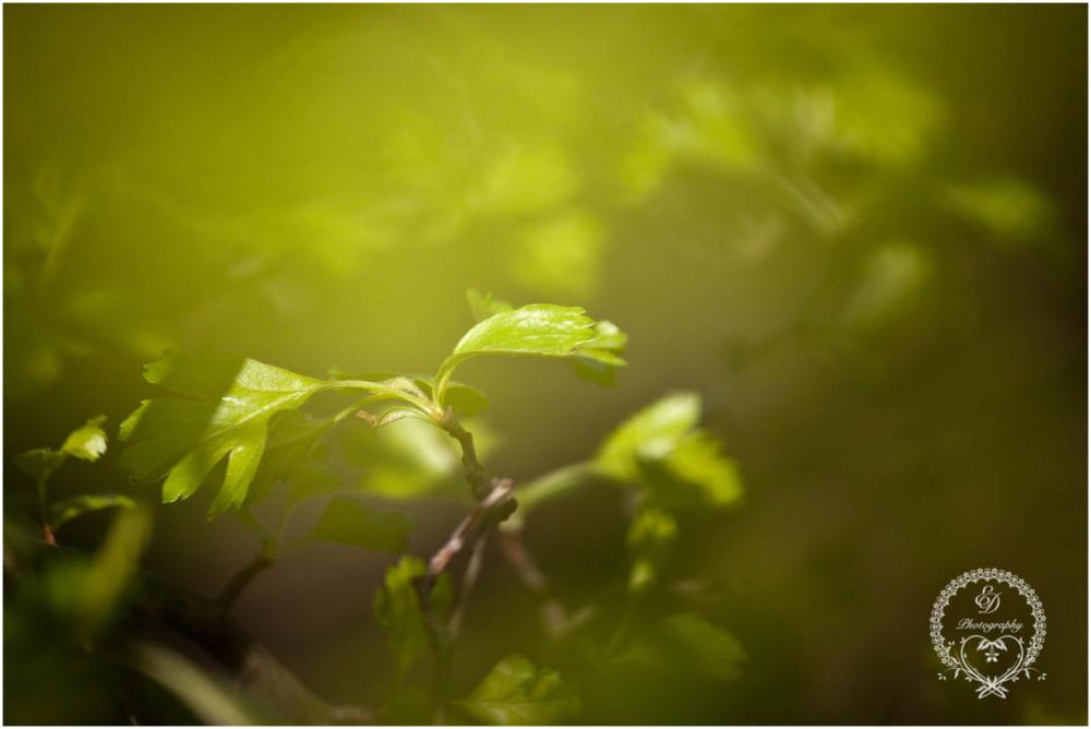 spring leaves green tree