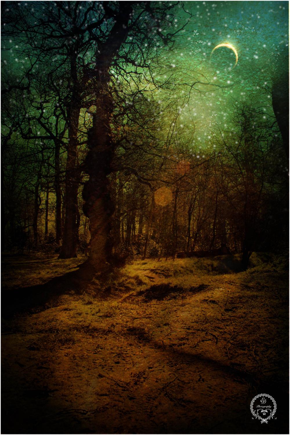 moonlight woods fantasy