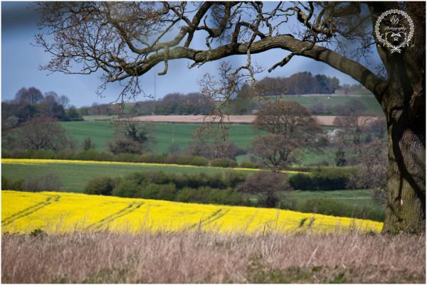 rapeseed, britain, derbyshire