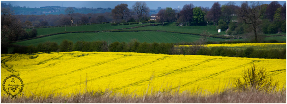 rapeseed, britain, derbyshire