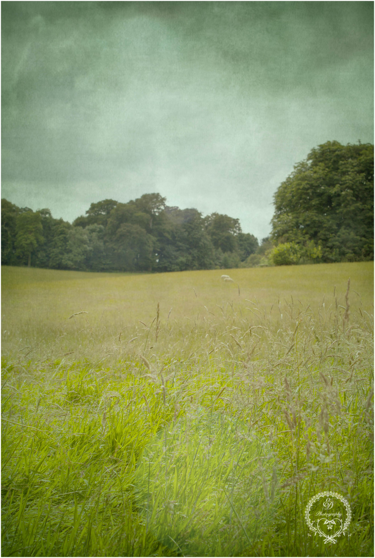britain countryside sheep