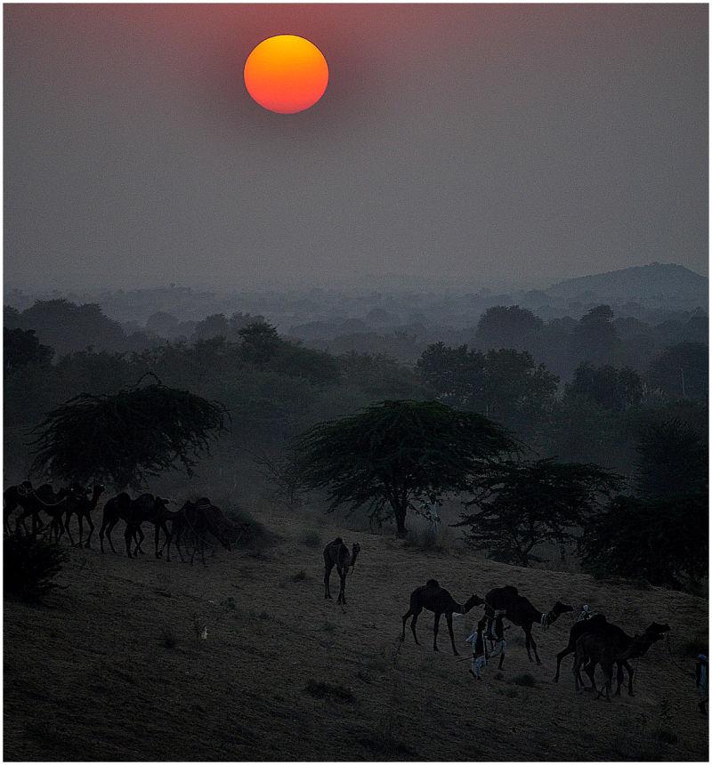camal safari