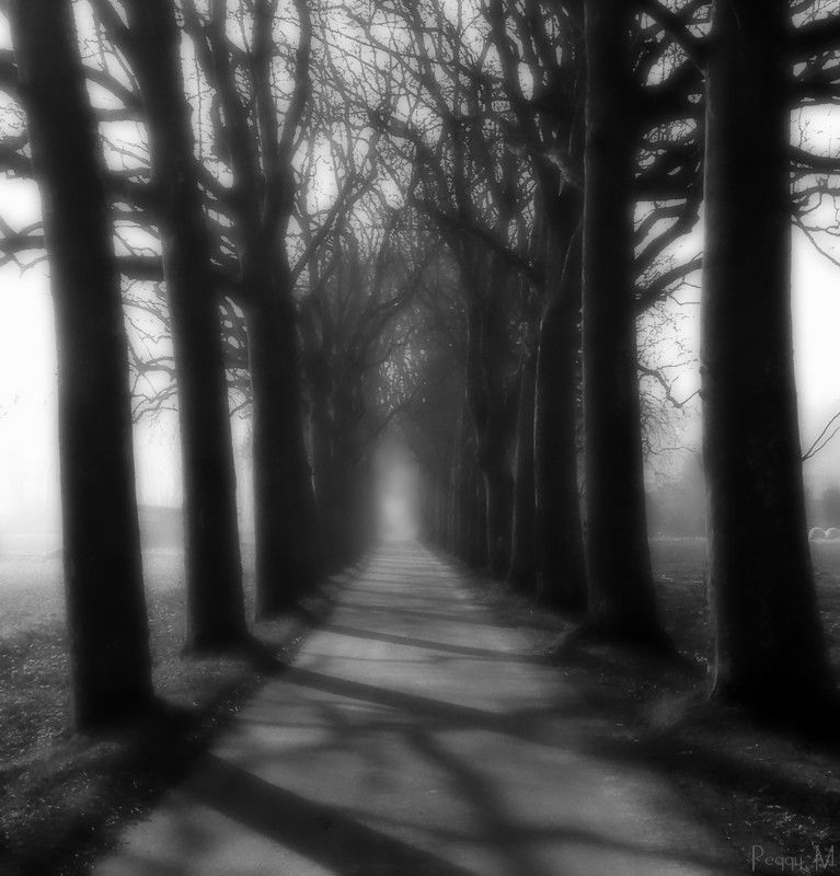 L'Allée des Ombres / The Path Of  The Shadows