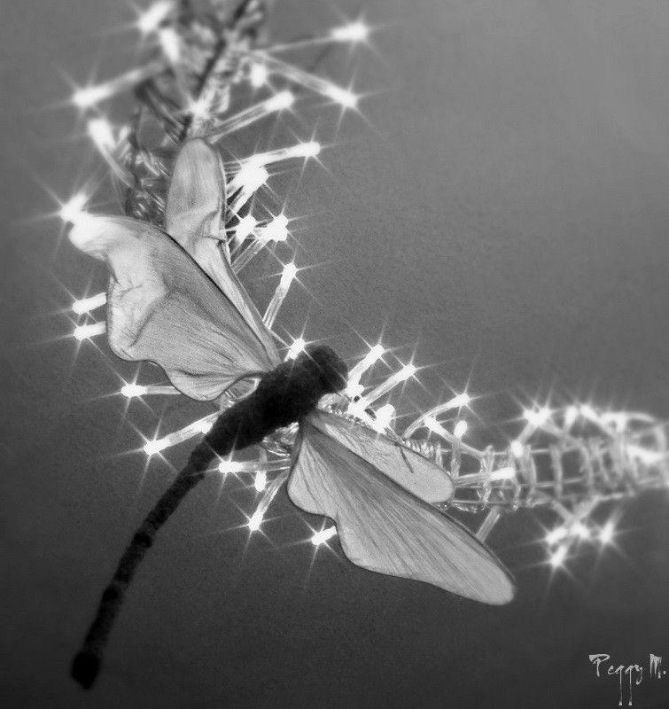 Entrer dans la Lumière... / Enter the Light ...