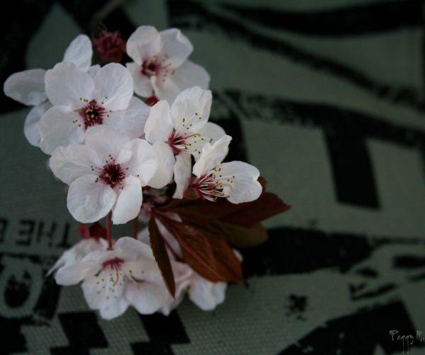 A Fleur de Toile...