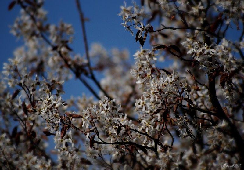 Des Fleurs à Mon Ciel...