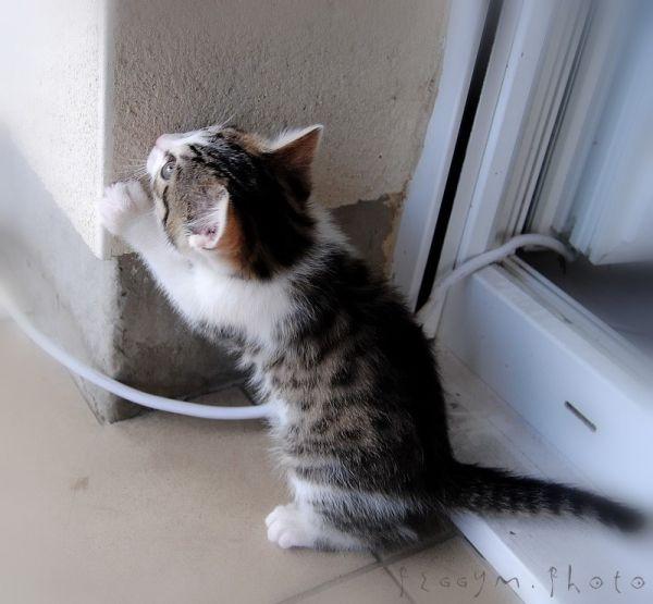 Chat y'est Chuis Cachééééééé ! ;-)