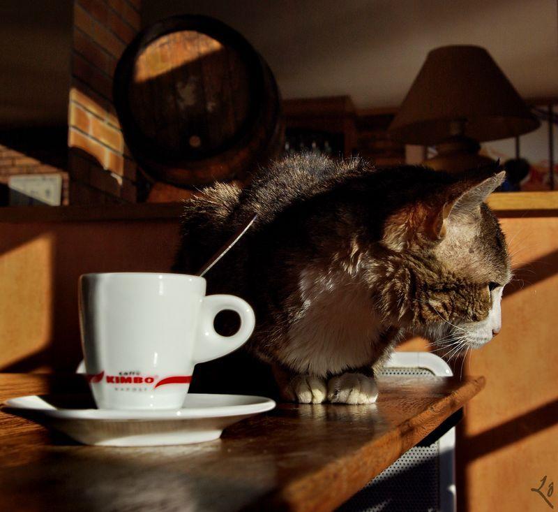 """Maman tu l'appelleras """"Le café Chat""""..."""