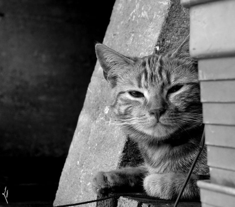 Une vie de chat...