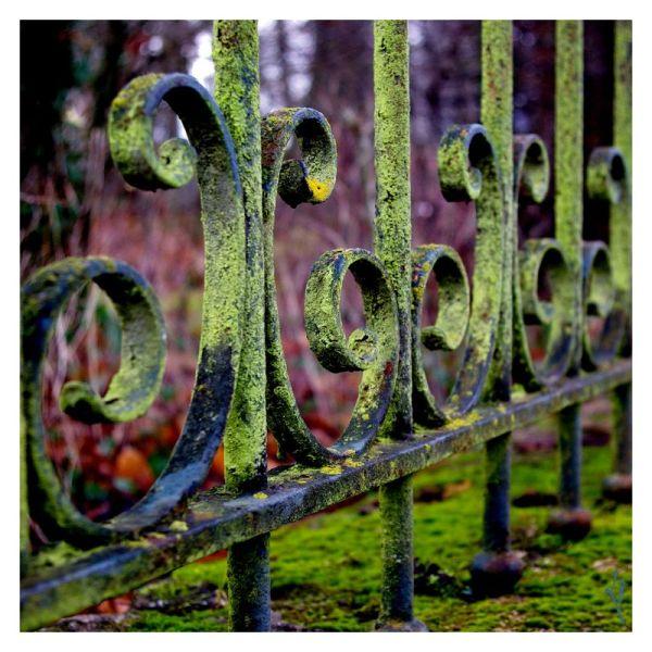"""Prison de """"vert"""" ..."""