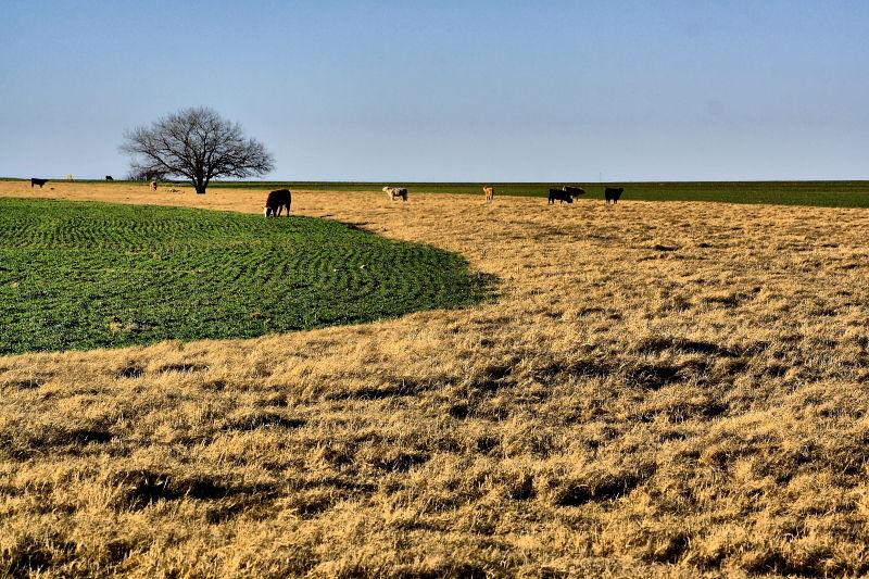 pasture near Hood Texas