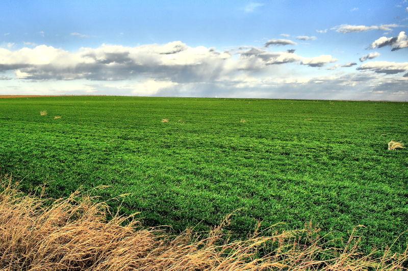 crops along wade road in denton county texas